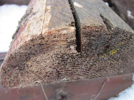 Поражённая древесина