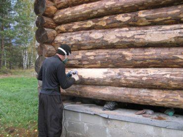 При каких условиях древесина поражается грибком?