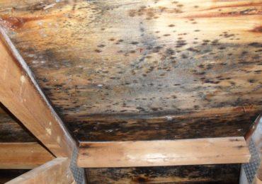 Почему древесина подвержена гниению? Защита – Неомид!