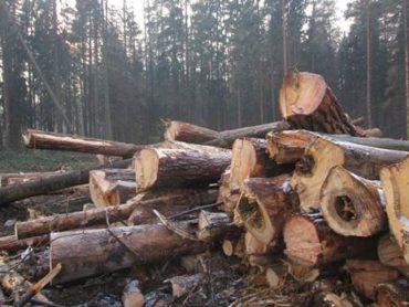 Почему древесина подвержена гниению? Защитная пропитка Неомид!