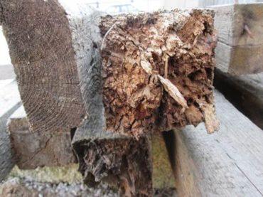 Какие насекомые являются вредителями древесины?
