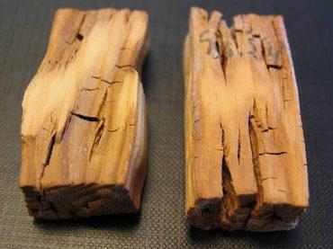 Почему гниет древесина?