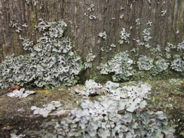 Пропитка средства от гниения древесины дерева