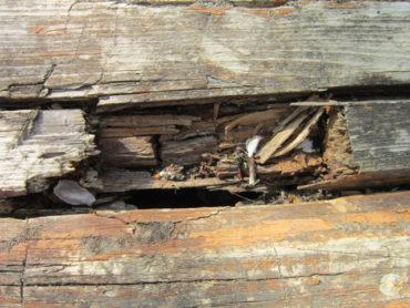 Кто и что вызывает гниение древесины? Что может помочь от гниения дерева?