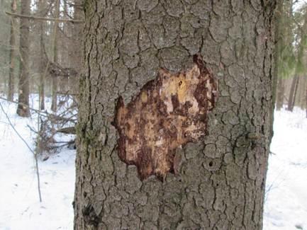 Пропитки для дерева. Пропитки для древесины – отзывы на пропитки Неомид