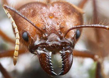 Чем страшны древесные жуки вредители древесины? Как от них избавиться?