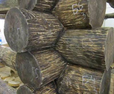 Как выбрать антисептики для древесины рубленого сруба?