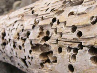 Способы защиты сруба деревянного дома от насекомых