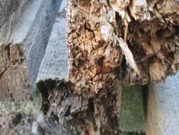 Биозащита для дерева. Средства биозащиты Неомид. Отзывы и обзор