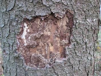 Что помогает уничтожить убить грибок на древесине? Неомид – 500!