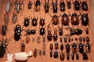 Защита пиломатериалов от жуков короедов? Какое средство лучше купить